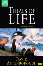 BBC. Борьба за выживание - BBC. The Trials of Life