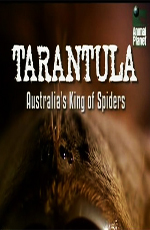 Animal Planet: ��������- ������������� ������ ������ - Animal Planet- Tarantula- Australia's King of Spiders