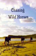 Вслед за дикими лошадьми - Chasing wild horses