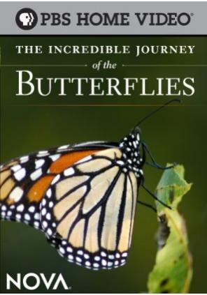 Невероятное путешествие бабочек - The Incredible Journey of the Butterflies