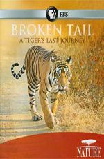 Сломанный хвост: Последнее путешествие тигра - Nature - Broken Tail- A Tiger's Last Journey