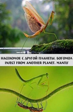 ��������� � ������ �������. ������� - Insect from another planet. Mantis
