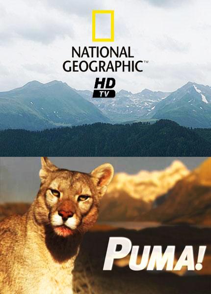 Пума! - Puma!