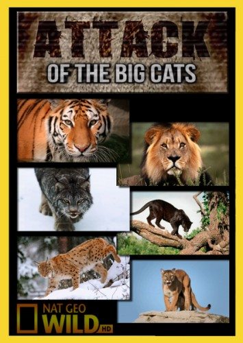 National Geographic: Атака больших кошек - National Geographic- Attack of the Big Cats