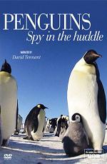 Пингвин — Шпион под прикрытием - Penguins — Spy In The Huddle
