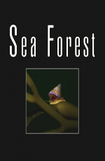 ������� ��� - Sea Forest