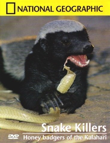 Медоеды: Змеиные убийцы - Honey Badgers of the Kalahari. Snake Killers