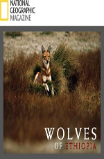 Animal Planet: Эфиопский волк - Animal Planet- The Ethiopian Wolf