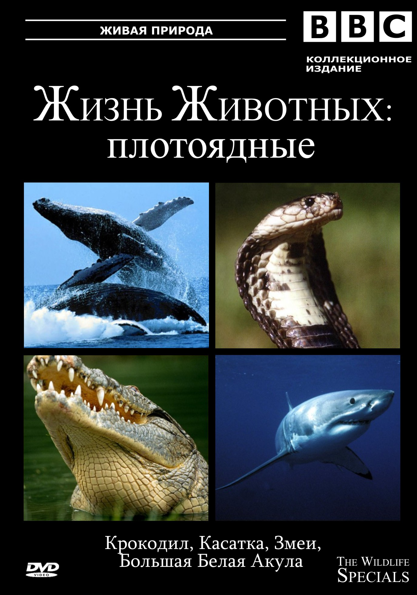 BBC: Жизнь животных - Плотоядные - BBC- The Wildlife Specials