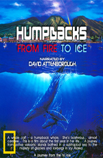 Горбатые киты. Из огня в лёд - Humpbacks. From Fire to Ice