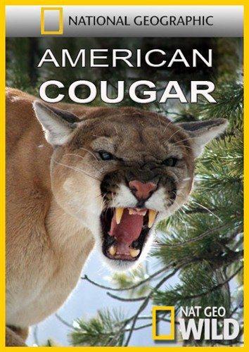Nat Geo Wild: Американская пума - American Cougar
