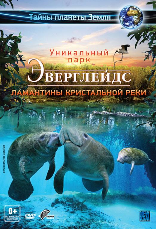 Эверглейдс: Ламантины Кристальной реки - Adventure Everglades- The Manatees of Crystal River