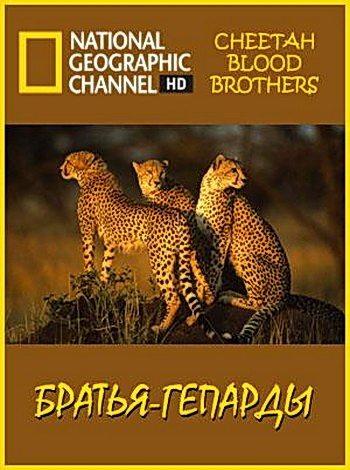 Братья-гепарды
