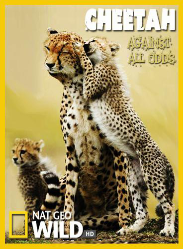 Гепарды - Наперекор всему - Cheetah - Against All Odds