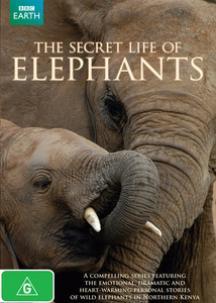 Тайны жизни слoнов - The Secret life of Elephants