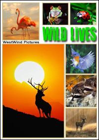 Великая книга природы - Wild Lives