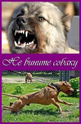 Не вините собаку - Don't Blame the Dog