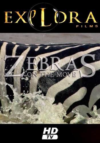 Великий поход зебр - Zebras on the Move