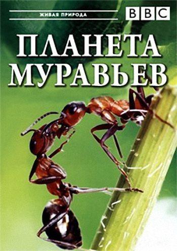 BBC: Планета муравьёв - Взгляд изнутри - Planet Ant- Life Inside the Colony