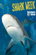 Animal Planet. Акулы под покровом ночи - Animal Planet. Shark after dark