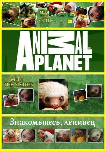 Знакомство с ленивцами - Meet the Sloths