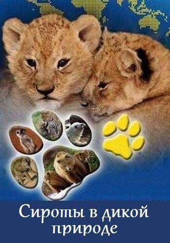 Сироты в дикой природе - Wild Orphans