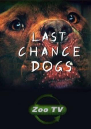 Осторожно, злая собака! - Last Chance Dogs