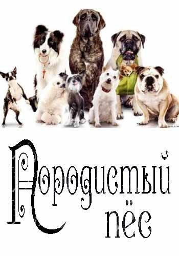 Породистый пёс - Purebred dog