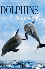 Дельфины. Шпион в стае - Dolphins. Spy In The Pod