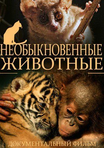 Необыкновенные животные - Extraordinary Animals