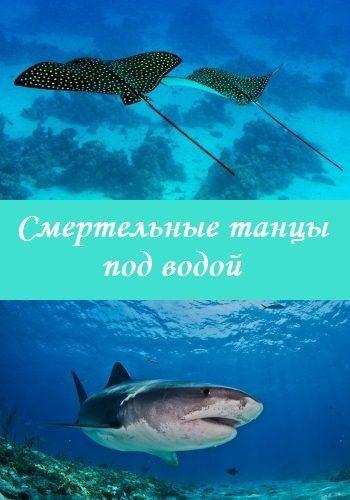 Смертельные танцы под водой - Deadly dance under the sea
