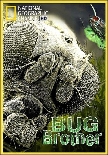Наши невидимые спутники - Bug Brother