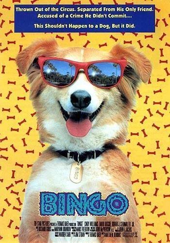 Мой пес Бинго - Bingo