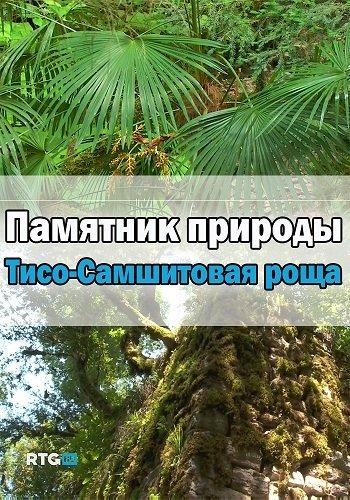 Памятник природы - Тисо-Самшитовая роща