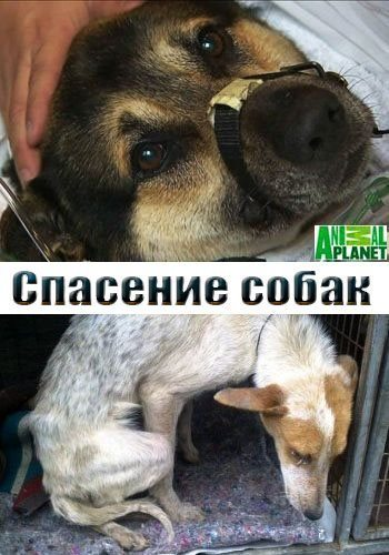 Спасение собак - The Dog Rescuers
