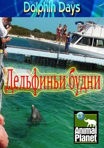 Дельфиньи будни - Dolphin Days
