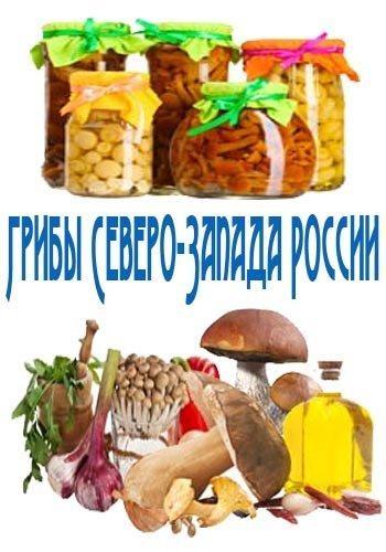 Грибы Северо-Запада России