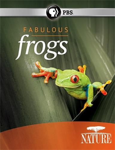 Удивительные лягушки - Fabulous Frogs