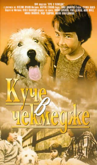 Собака в ящике - Kuche v chekmedzhe
