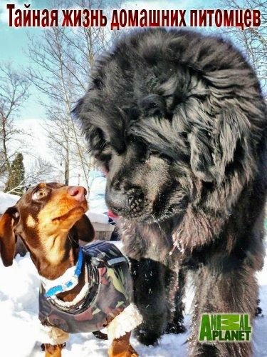 Тайная жизнь домашних питомцев - Secret life of pets