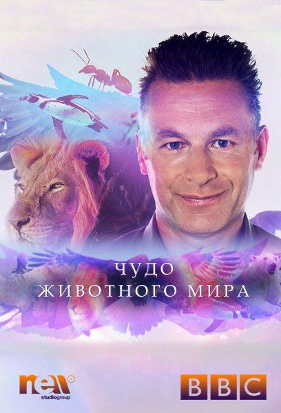 BBC. Чудо животного мира - Wonder of Animals