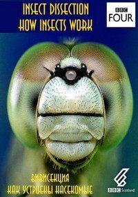 Вивисекция. Как устроены насекомые