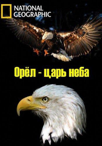 Орёл - царь неба - The Eagles