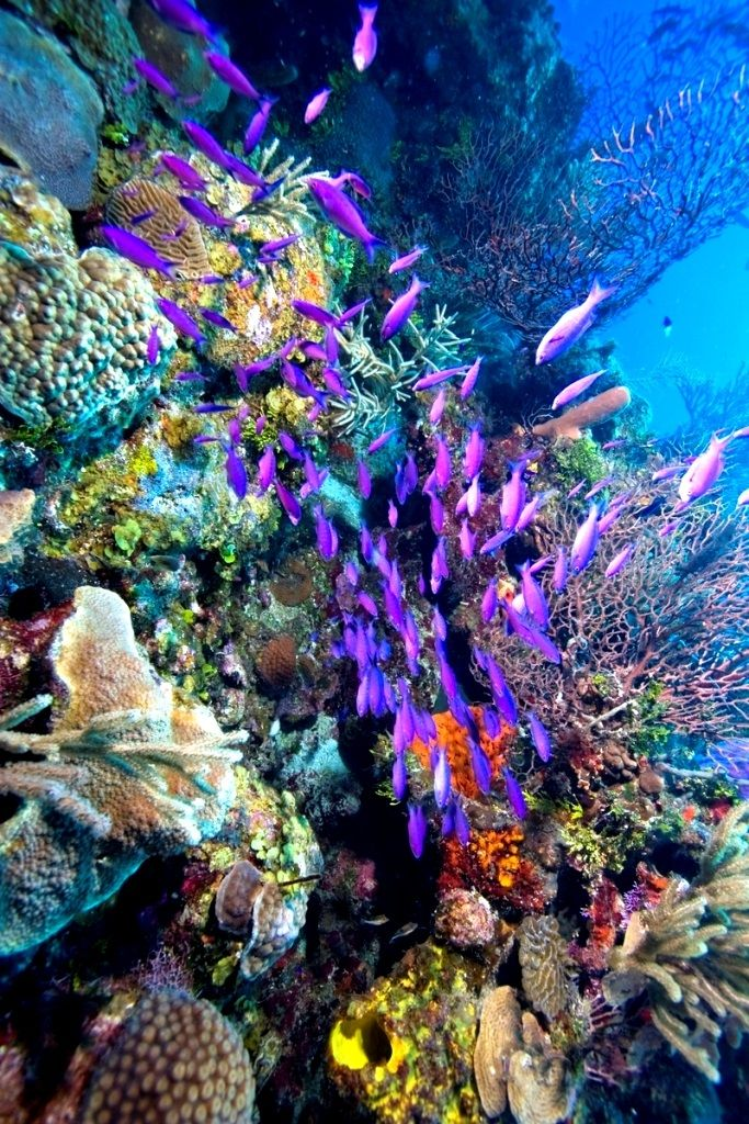 ����� �� ������� ��������� ���� - Life on the Barrier Reef