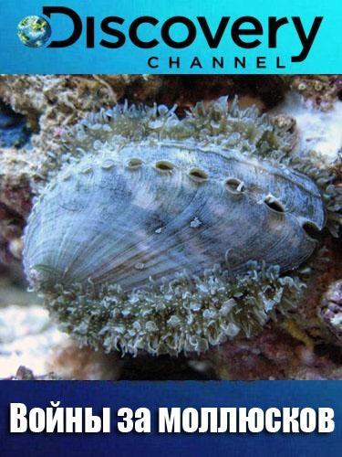 Войны за моллюсков - Dive Wars Australia