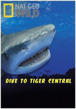Погружение в царство тигровых акул - Dive to Tiger Central