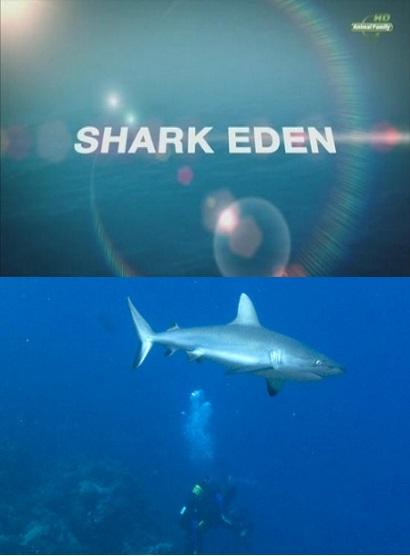 Царство акул - Shark Eden