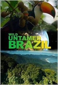 Дикая Бразилия - Wild Untamed Brazil