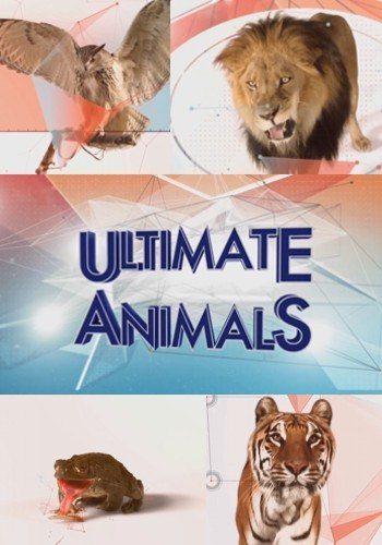 Увлекательная зоология - Ultimate Animals