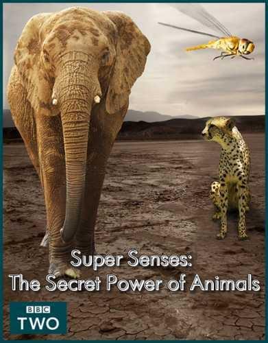 BBC: Уникальные способности животных - Super Senses- The Secret Power of Animals